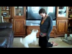 Собака-домохозяйка!
