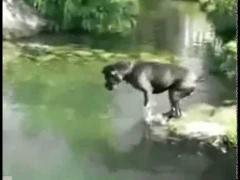 Собака ловит рыбу