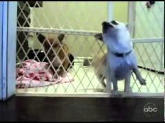Собака-блондинка!