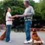Как выбрать инструктора для дрессировки собаки