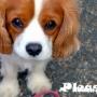 Коррекция поведения собак: попрошайничество