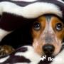 Собака боится громких звуков. Что делать?
