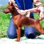 Как научить собаку делать стойку
