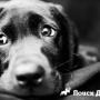 Как отучить собаку скулить?