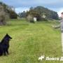 Как и где дрессировать собаку
