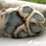 Как ухаживать за подушечками лап у собак?