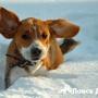 Что делать при обморожении собаки?