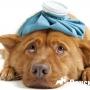 Тепловой удар у собаки: что делать?