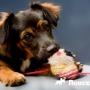 Зачем нужны съедобные игрушки для собак?