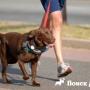 Как безопасно удерживать собаку на поводке?