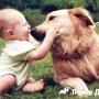 Как приучить щенка к детям?