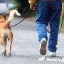 Британцы выгуливают собак 433 раза в год