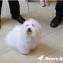 Дистанционное общение с собакой – теперь это реально!