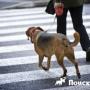 Иранских собаковладельцев могут побить плетьми