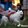 В Хэллоуин на Манхеттене прошел парад собак