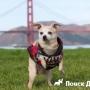 Мэром Сан-Франциско стала собака