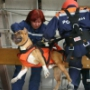 МЧС России и МВД Ирана выведут новую породу собак