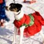 Собаки Челябинска продефилировали в нарядах