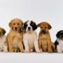 Ученые исследовали генетику собак