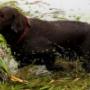 Уникальная собака-дайвер живет в Калифорнии