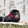Tibet Dog Estonia пройдет в Таллине