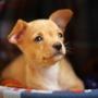 Собаки умеют различать эмоции