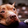 На Кипре собаку поместили под защиту государства