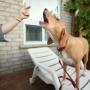 Как научить собаку лаять по команде