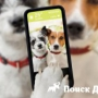 В России запустили мобильное приложение для собак