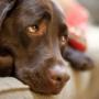 Собаки не испытывают чувство вины