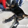 На Урале стали изготавливать ортезы для собак