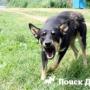 Нервно-возбудимая собака