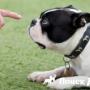 Обучение глухой собаки