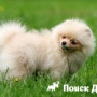 Что делать, если собака ест траву
