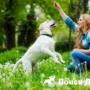 Концентрация внимания у собаки