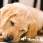 Кости в рационе собак