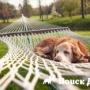 Где оставить собаку во время отпуска