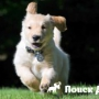 Собака слишком бурно реагирует на прохожих