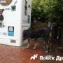 В Стамбуле бродячих собак кормят автоматы