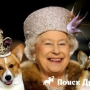 Королева Великобритании больше не разводит корги