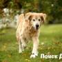 Сверхактивность у собаки