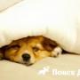 Можно ли брать собаку на кровать?