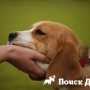 Как собака выбирает себе хозяина