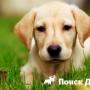 Типы шерсти собак