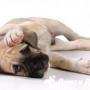 Что делать, если собака чешется, а блох нет?