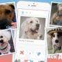 В США действует «собачья» соцсеть