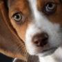Зрение собаки