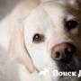 Что делать, если у собаки сухой и горячий нос?