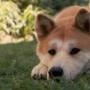 У собаки рвота с белой пеной?