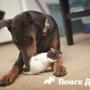 Собака отравиилась крысиным ядом